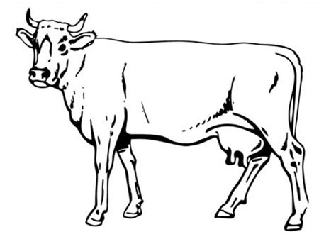realistic cow coloring page drawn cattle realistic pencil and in color drawn cattle