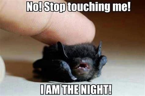 Funny Meme Captions - 30 funny animal captions part 5 30 pics amazing