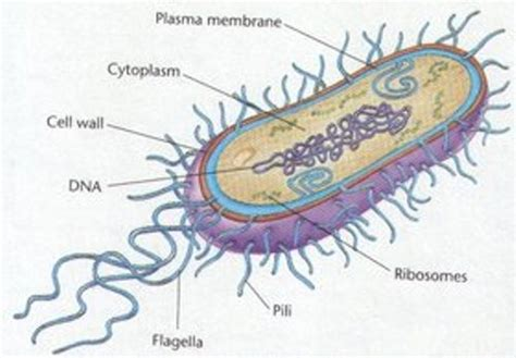 10 facts about archaebacteria fact file