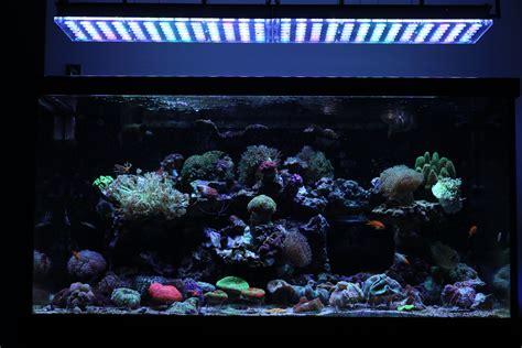 best led light for saltwater aquarium beautiful brazilian tank with atlantik v4 orphek
