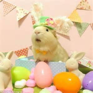 Egg Themed Dresses From Browns For Easter by Morpheus Guinea Pig Dresses Up In Costumes Daily Mail