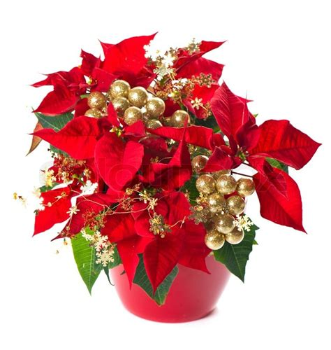 Decorations Poinsettia - poinsettia flower with golden decoration