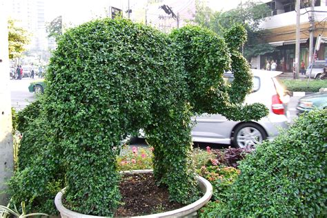 elephant topiary file elephant topiary jpg wikimedia commons