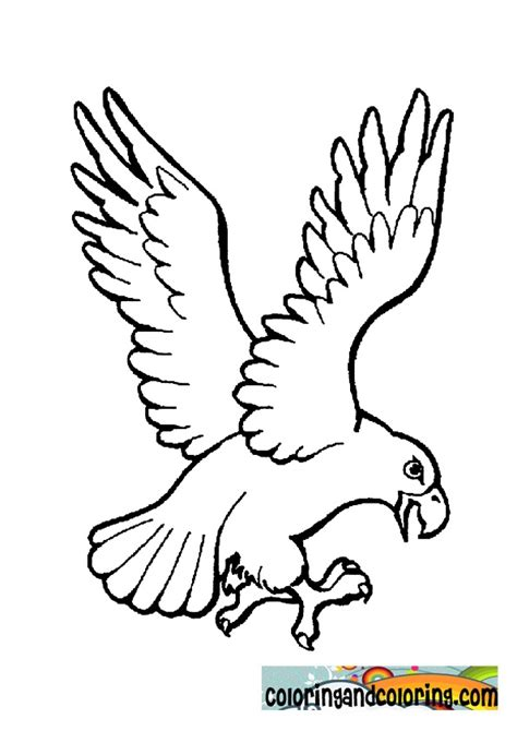 Harpy Eagle Coloring Pages Eagles Coloring Pages