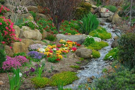 Alpines Rock Gardens Rock Garden Plants Uk
