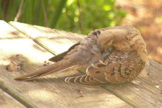 the zen birdfeeder may 2009