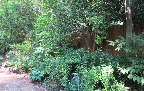 78 best images about shade gardens on pinterest gardens garden ideas and ferns garden