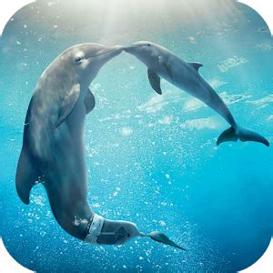 google images dolphins dolphins live wallpaper android apps on google play