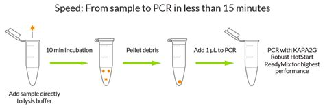 dna extraction how to write experiment report