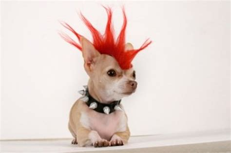 is sugar bad for dogs howl o ween bad to the bone irresistible pets