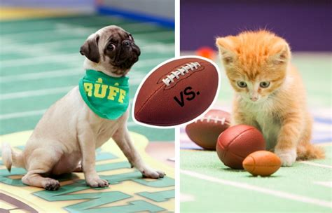 puppy vs kitten puppy bowl vs kitten bowl which is adorably superior tv insider