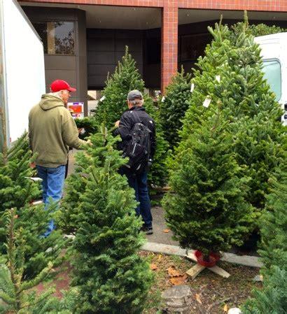 hubbards christmas tree farm spotted cozzolino trees at menlo park farmers market inmenlo