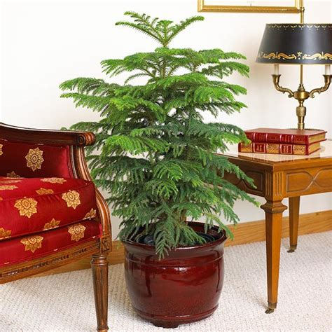 where to buy cheap house plants indoor gardening ideas 7 houseplants that add oxygen to