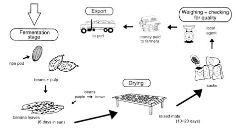 The Diagram Below Shows Two Different Processes For Manufacturing Black Tea Summarise The by Random Book And Reviews The Diagram Below Shows How Cocoa Beans Are Prepared For Export