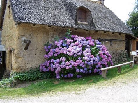 cottage gardens the charming of country