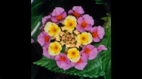 fiori piante dalla a alla z piante e fiori dalla a alla z home visualizza idee immagine