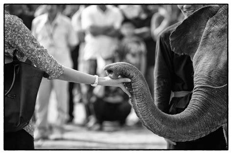 1325266736 des elephants et des hommes http www gouv mc action gouvernementale l environnement