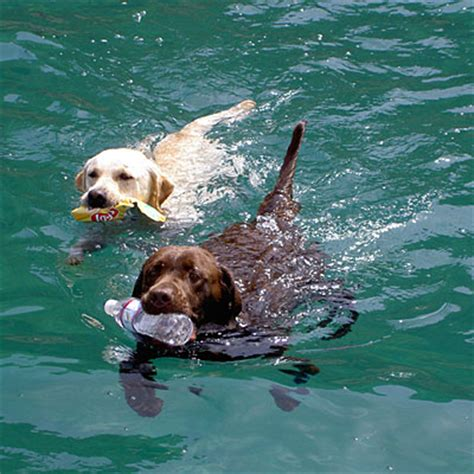 best swimming dogs reader photo dogs swimming coastal living reader photos coastal living