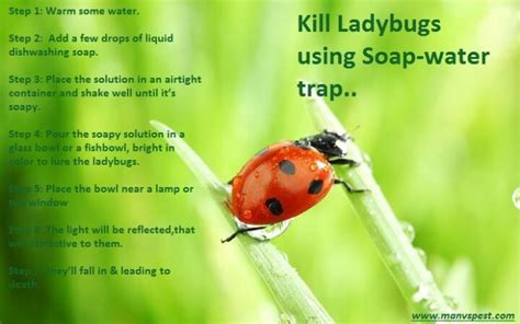 ladybugs in the house how to get rid of ladybugs in the house 28 images fly identification chart fishing