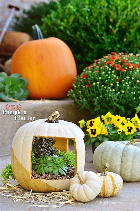 Pumpkin Planter by Succulent Pumpkin Planter