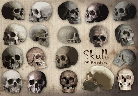 gothic pattern brush 20 skull ps brushes abr vol 9 free photoshop brushes at