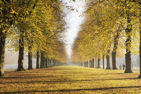 Sunday Photo: Autumn in England   The Stunning Lime Avenue