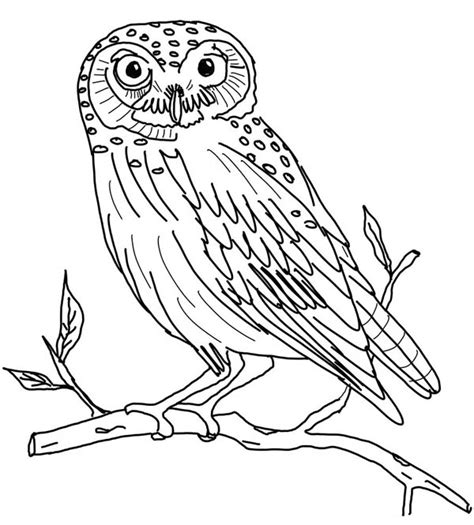 owl coloring page  print