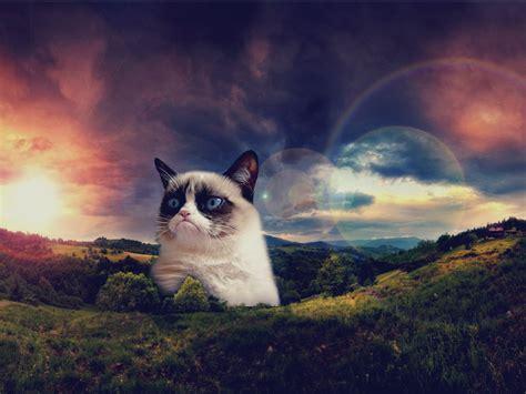 cat wallpaper reddit grumpy cat wallpaper reddit wallpapers gallery