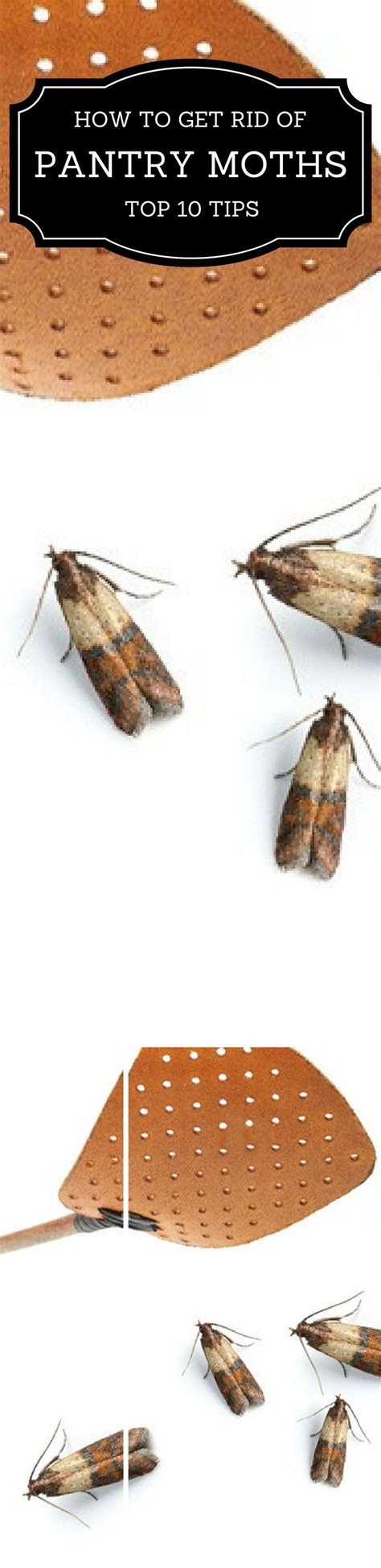 how to get rid of moths in bathroom best 2999 home decor and organizing images on pinterest