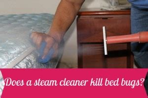 does steam kill bed bugs does a steam cleaner kill bed bugs feb 2018