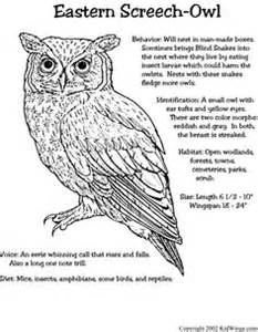 diagram of a great horned owl diagram wiring diagram free