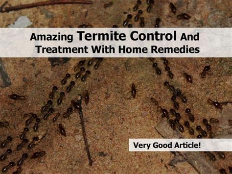The Amazing Termite amazing termite and treatment with home remedies