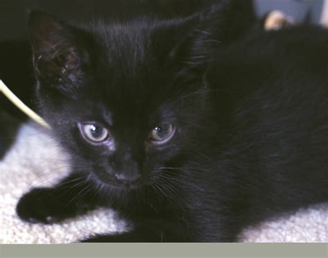 """Cute """"Panther""""   Cats   Pinterest"""