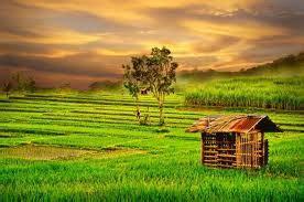 gambar pemandangan sawah  indonesia gambargambarco