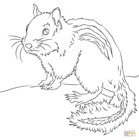ground squirrel coloring page chipmunk coloring page free printable coloring pages