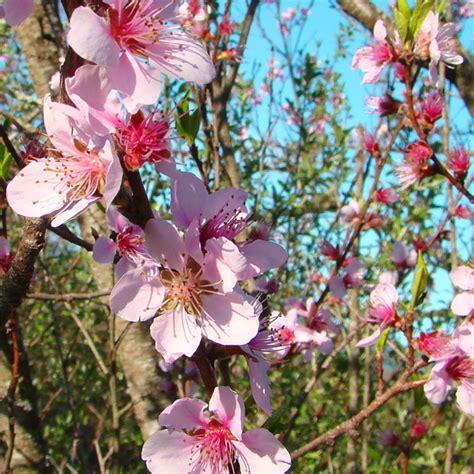 fiore simbolo di speranza le 10 storie pi 249 lette di marted 236 7 luglio 2015
