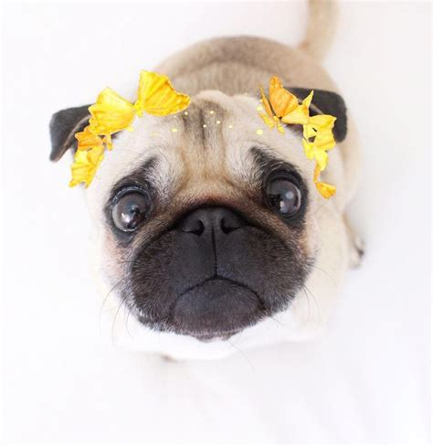 pug filter 25 best ideas about snapchat filters on makeup goals snapchat s and best