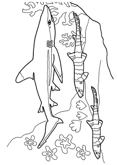 20 Dessins De Coloriage Requin Tigre 224 Imprimer Dessin Colorier Requin Scie A Imprimer L