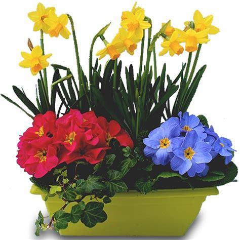 Comment Aménager Un Petit Balcon by Scenery Pictures Fleurs De Printemps En Jardiniere