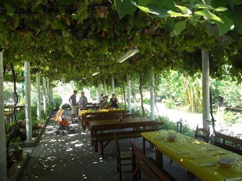 come coltivare l uva da tavola coltivare vite pergola terminali antivento per stufe a