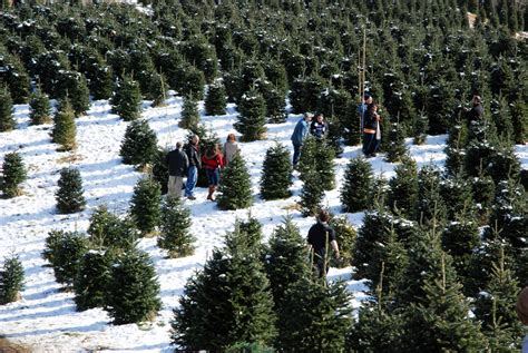 high country choose and cut christmas tree farms in the