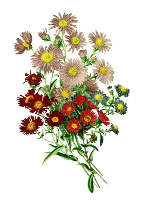 cara menyimpan gambar format png arie cellular koleksi gambar bunga format png