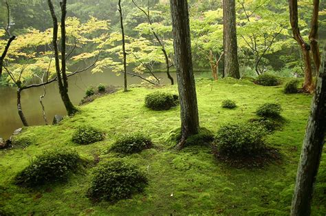japanese zen gardens the 25 most inspiring japanese zen gardens