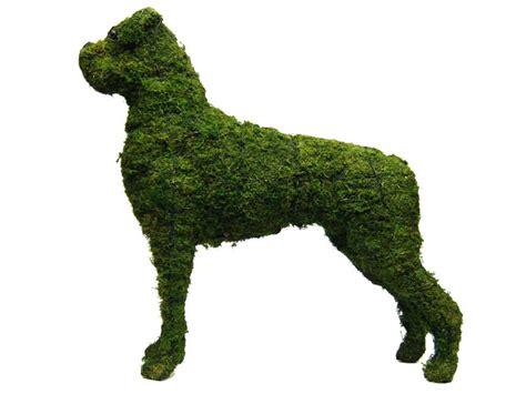 animal topiary frame boxer animal topiary frame