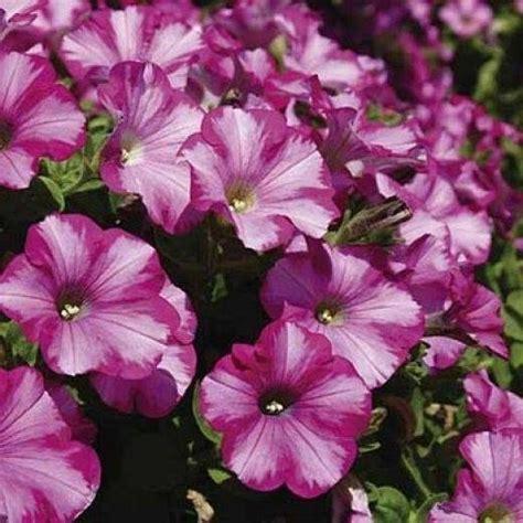 creare un bel giardino come creare un bel giardino giardino fai da te
