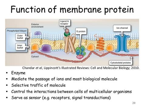 protein z function cell structure and function part 01