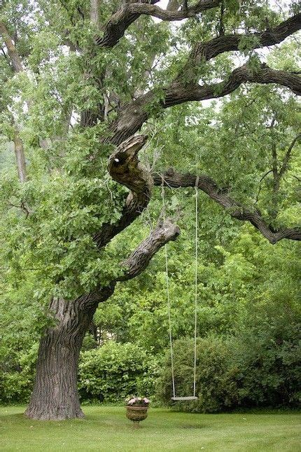 backyard tree swings 25 best ideas about tree swings on pinterest childrens