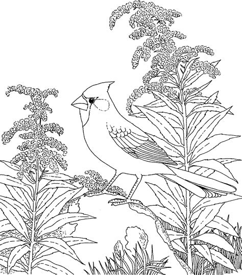 coloring pages of state birds and flowers pin by elizabeth owens on flower pic pinterest
