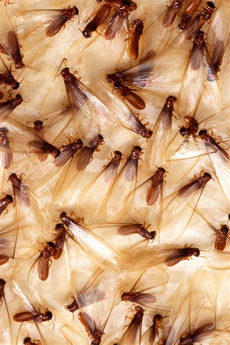 What Does Couched by Out For Termite Infestation To Protect Your Property