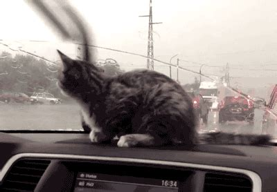 cat freaking out maybe in heat how to freak your kitten out in the car dr heckle